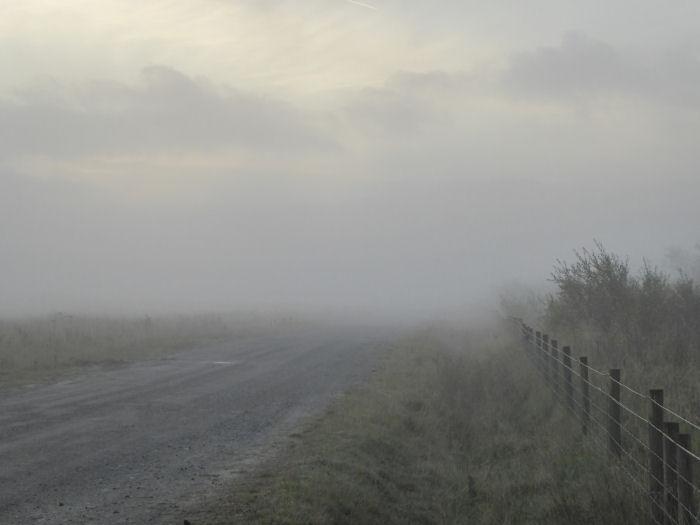 Arriving mist