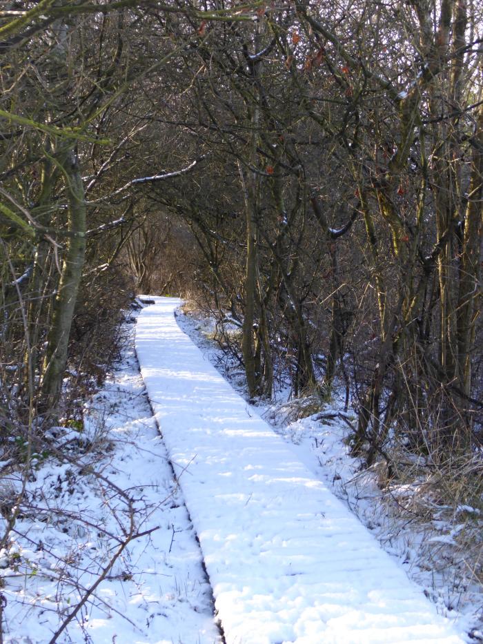 Hazel Avenue in the snow