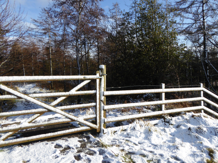 Gate covered with snow