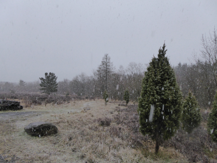 Snow over the heathland