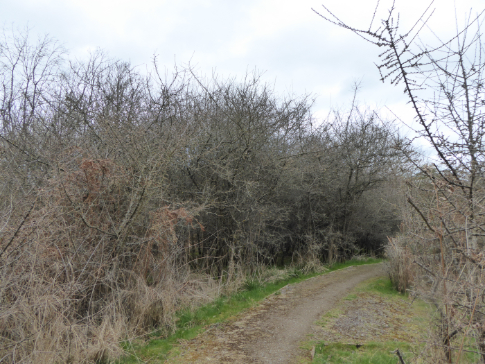 Blackthorn corner
