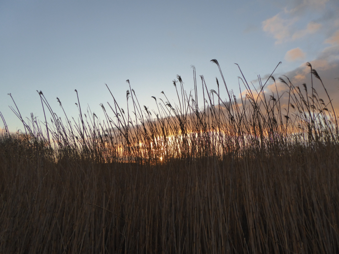 Dawn over the reed bed