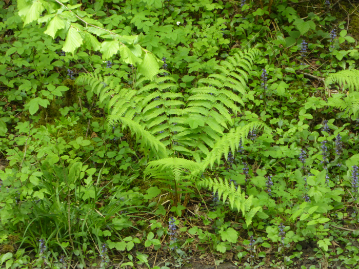 Fern in summer