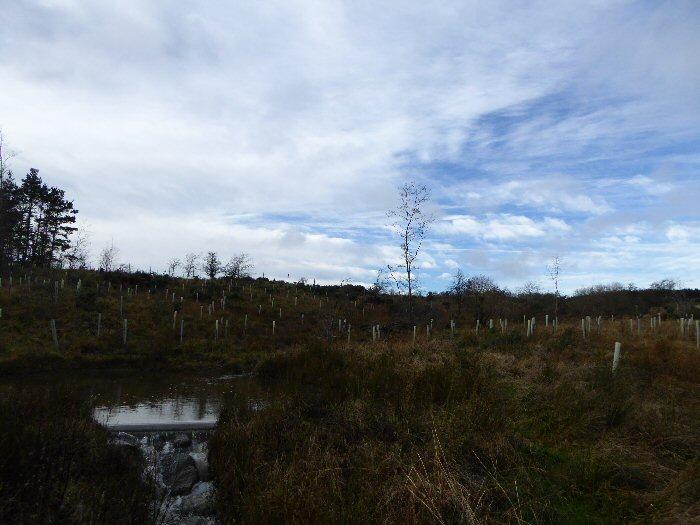 Blue sky across the moor