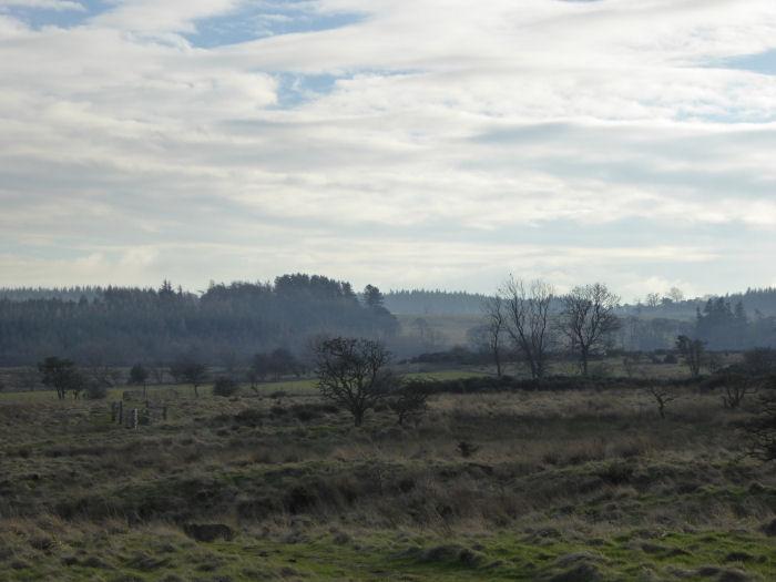 The moor looking towards to wetland