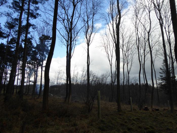 Fire, blue sky, cloud
