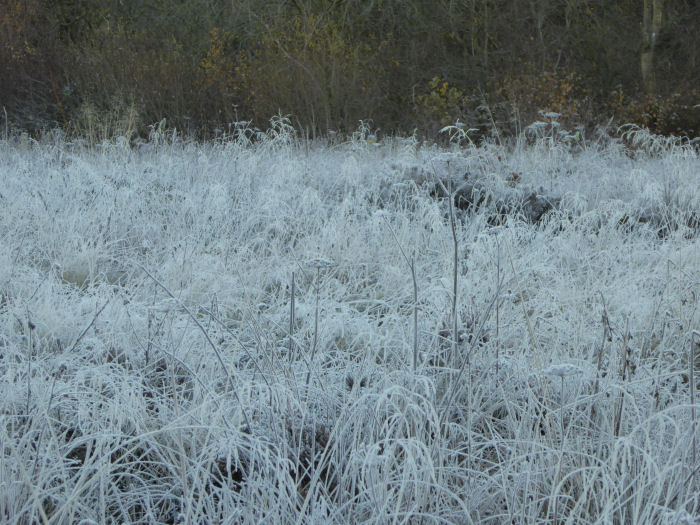 Frost covered heath