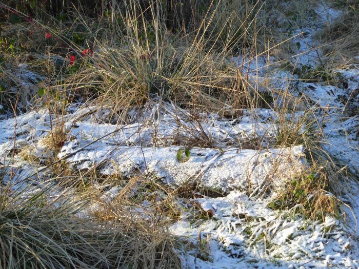 Lying snow
