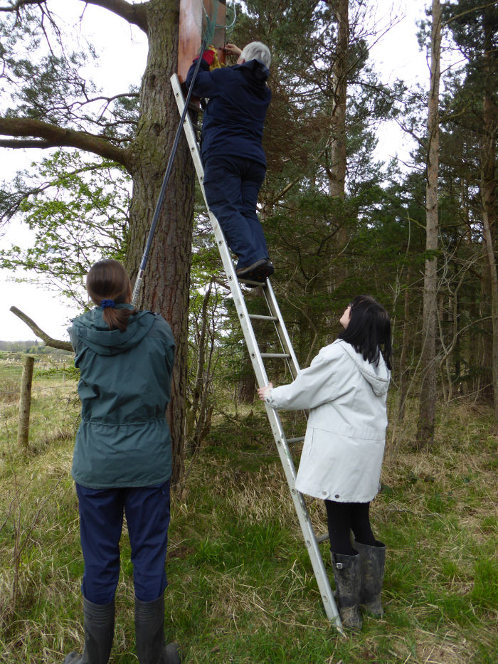 Checking owl boxes
