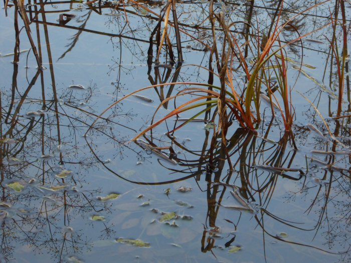 Reflections in the Scrapes