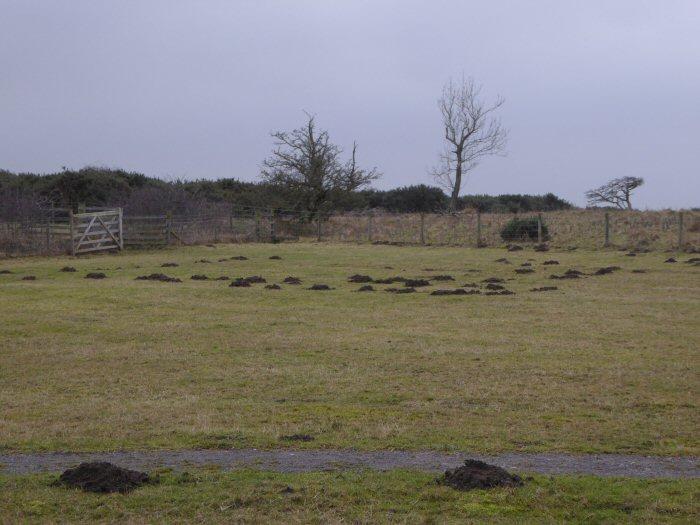 Mole Hills