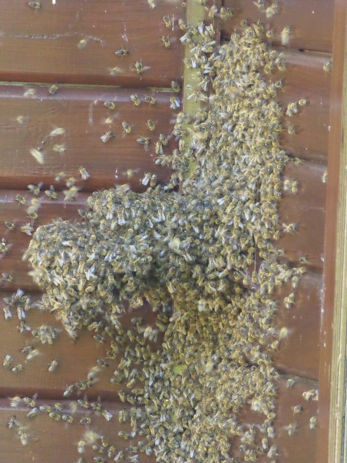 Bees waiting to return into their hive