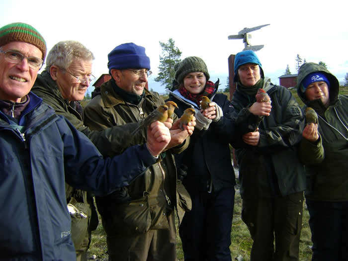 Bird ringers in Sweden
