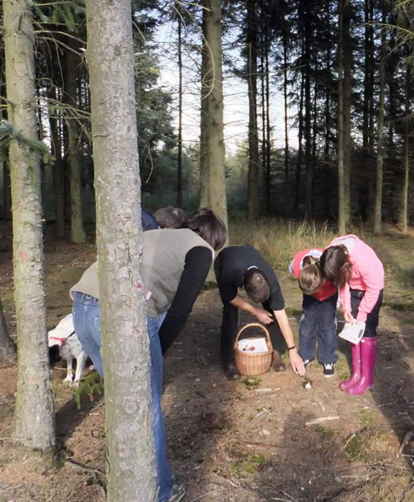 Fungal Foray group