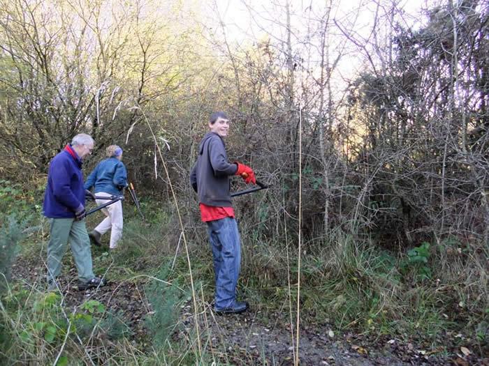 Foxglove volunteers