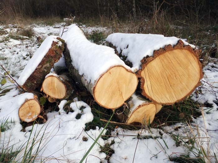 Snow-covered logs