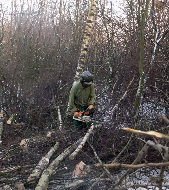 Graham felling a tree