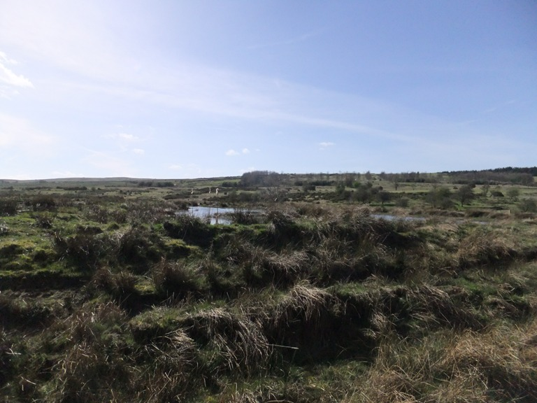 View from little hide