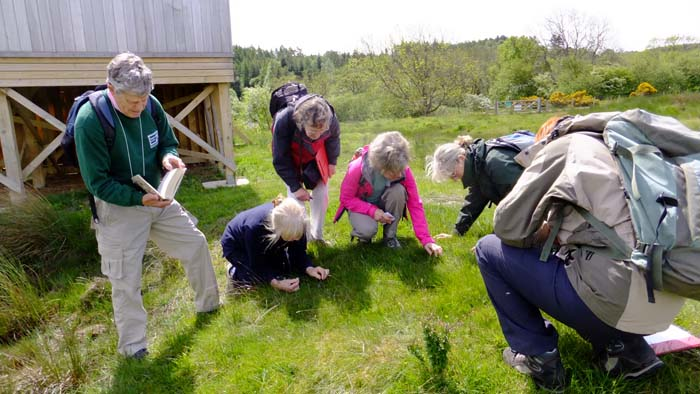 The group looking at the Adder's Tongue Fern