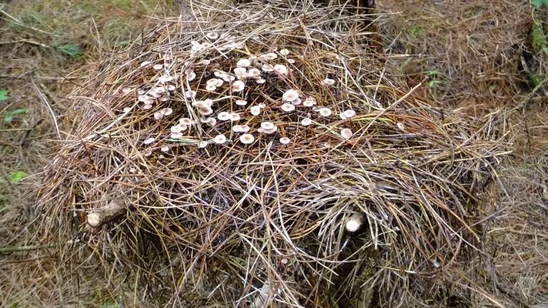 Fungus 'nest'