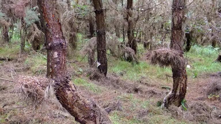 'Nest' of fungus!