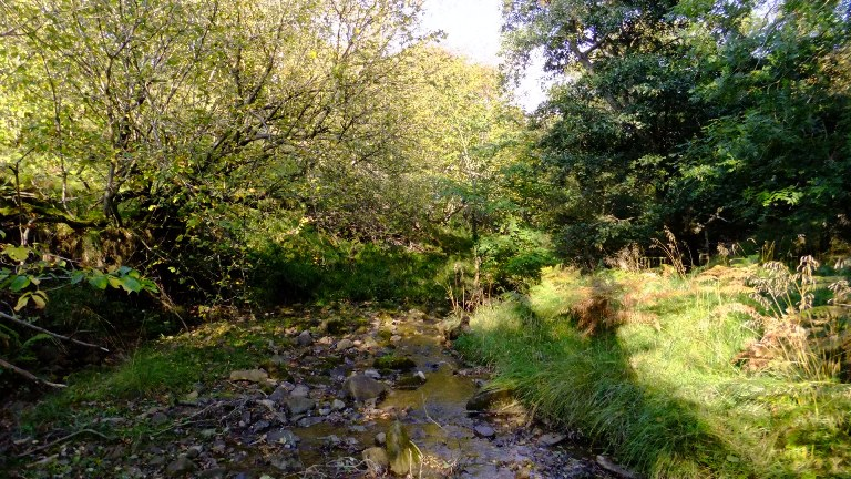 Risedale Beck in the sunshine