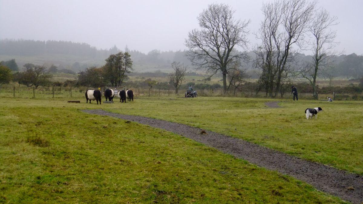 Harrowing the meadow