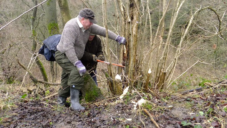 Coppicing the Hazel