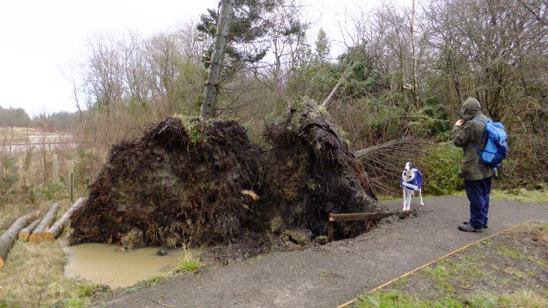Big root plates