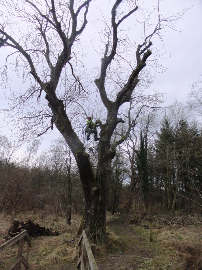 Tree Surgery 1