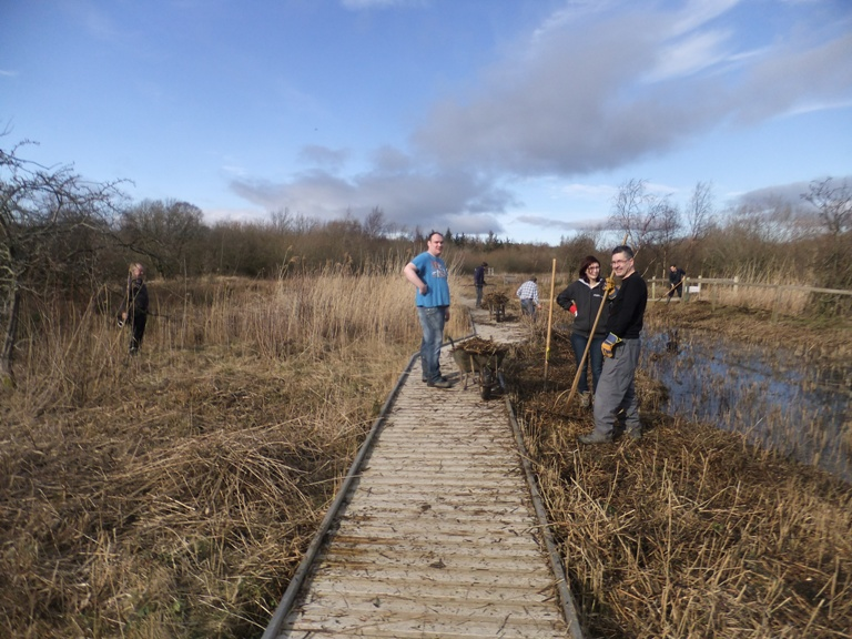 Working in the reedbed