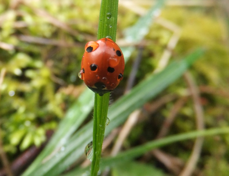 Ladybird's eye view