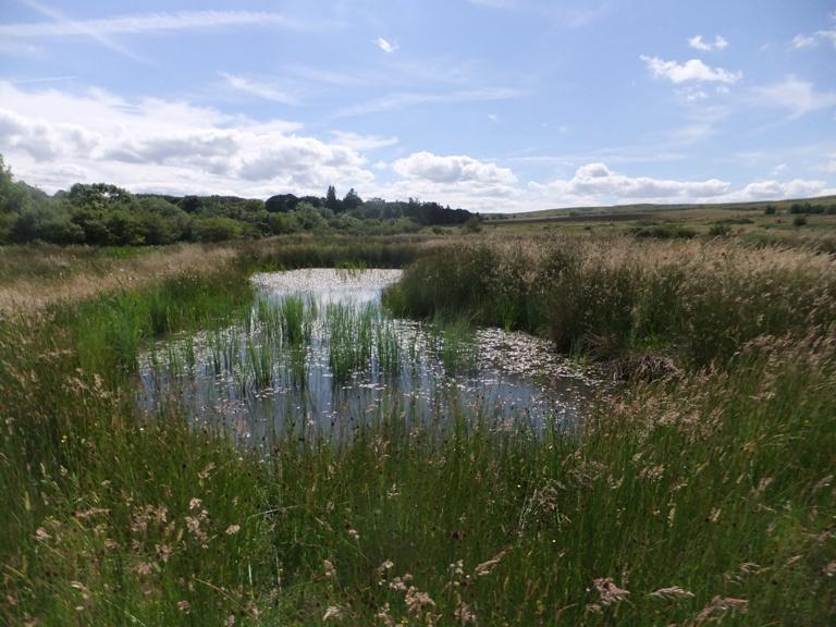 Wetland 5