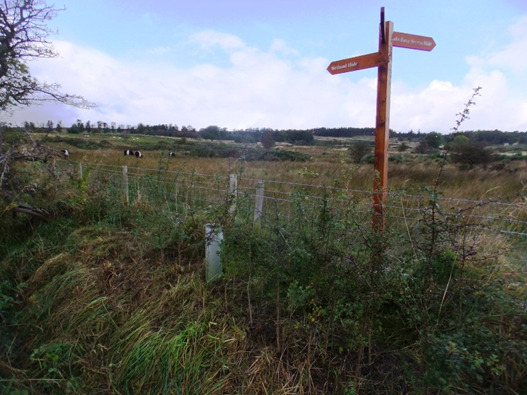 Ancient Hedge