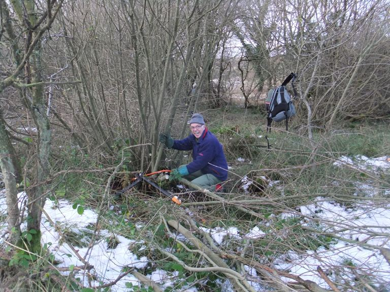 Coppicing Willow