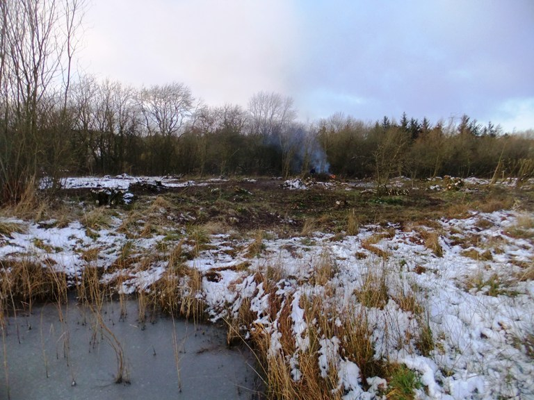 Coppiced area