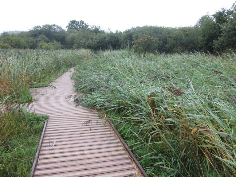 Reeds_flattened