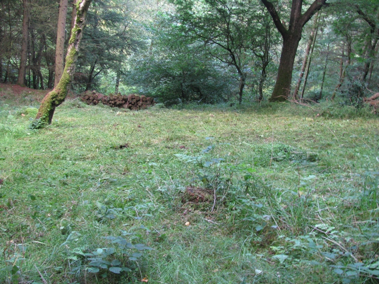 Bluebell bank at the end of summer