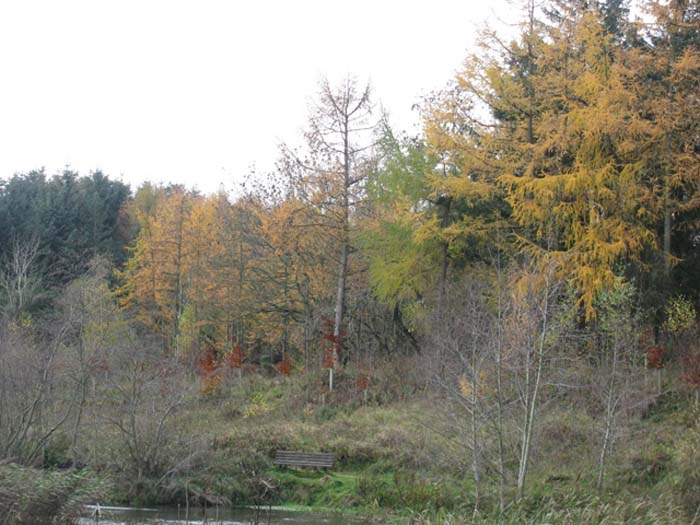 Lake with trees in autumn colours