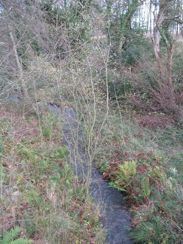 Small stream rushing through the trees