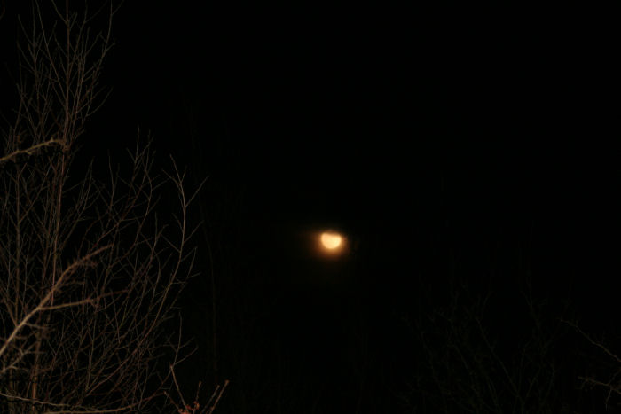 Moonrise at Foxglove Covert