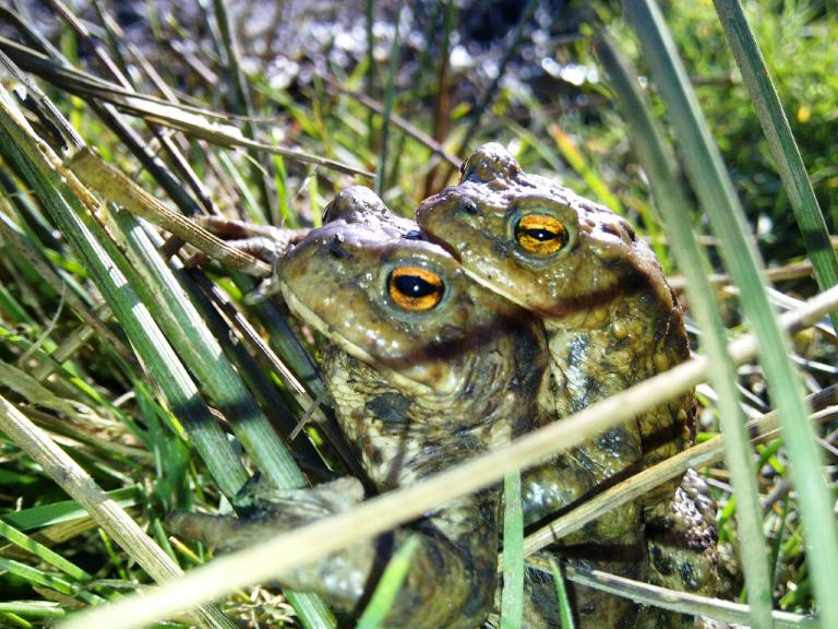 Happy Toads