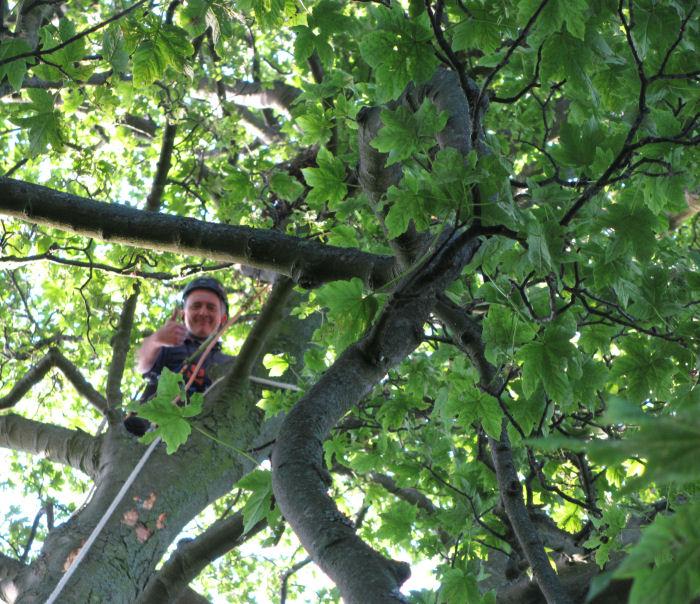 John climbing up a tree