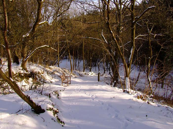 snowcovered pathways
