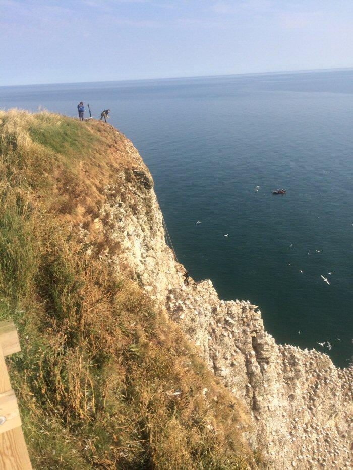 Cliffs and birds