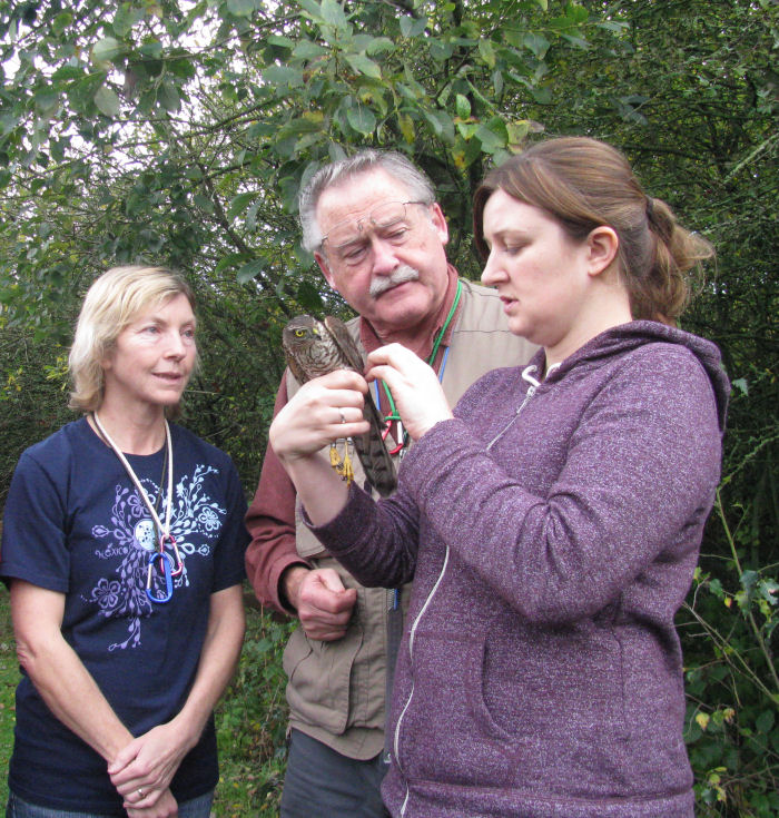 ringers looking at the Sparrowhawk
