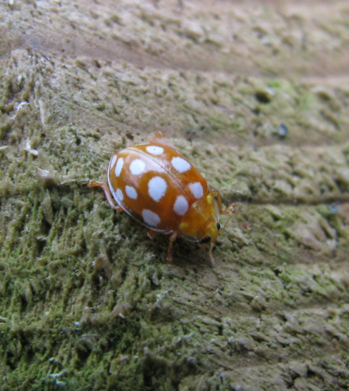 16 Spot Ladybird on marker post