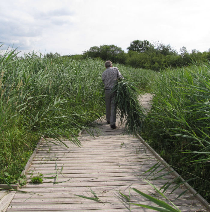 Removing the reeds from the net ride and pond dipping platform