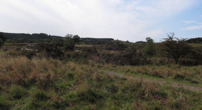 Sheep on the moor