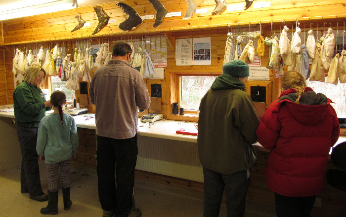 A busy ringing room